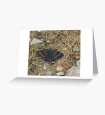 greyish-black butterfly with bright orange stripes Greeting Card