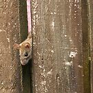 ' Hello ...I'm Ratty, your new neighbour....'   !! by Roy  Massicks