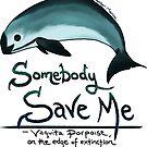 Save Me - Vaquita Porpoise, art © 2015 ~ by Amber Marine ~ Wildlife Artist ~ © 2004-2019