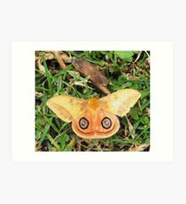 Yellow butterfly or moth Art Print