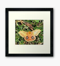Yellow butterfly or moth Framed Print