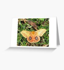 Yellow butterfly or moth Greeting Card