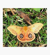 Yellow butterfly or moth Photographic Print