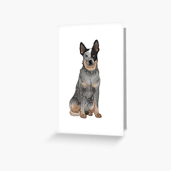 Blue Australian Cattle Dog Greeting Card