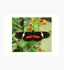 Black and red butterfly with wide wings Art Print
