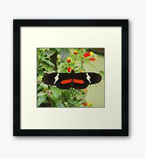 Black and red butterfly with wide wings Framed Print