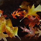 Autumn leaves in the rain..... by DonnaMoore