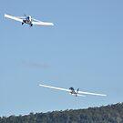 Albion Park Airshow 2017-Pawnee towing Fox glider by muz2142