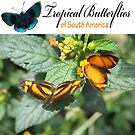 Cover for our Butterfly Calendar by dare2go