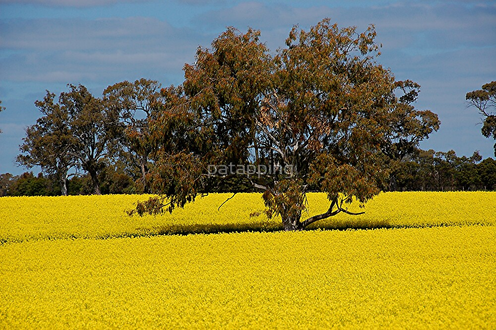 Canola Fields Vic by patapping