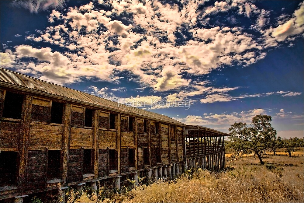 The Wool Shed by Peter Kewley