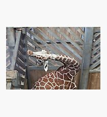 Giraffe yoga Photographic Print