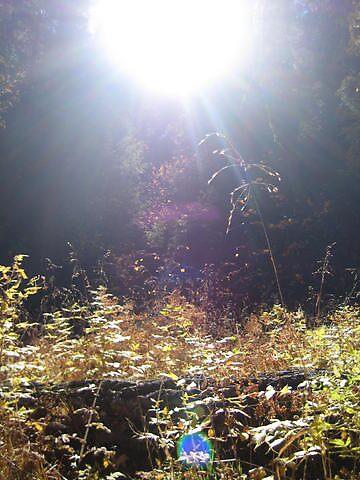 Sunlight by Beelicious