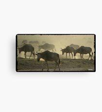 Wildebeests Migrating Canvas Print
