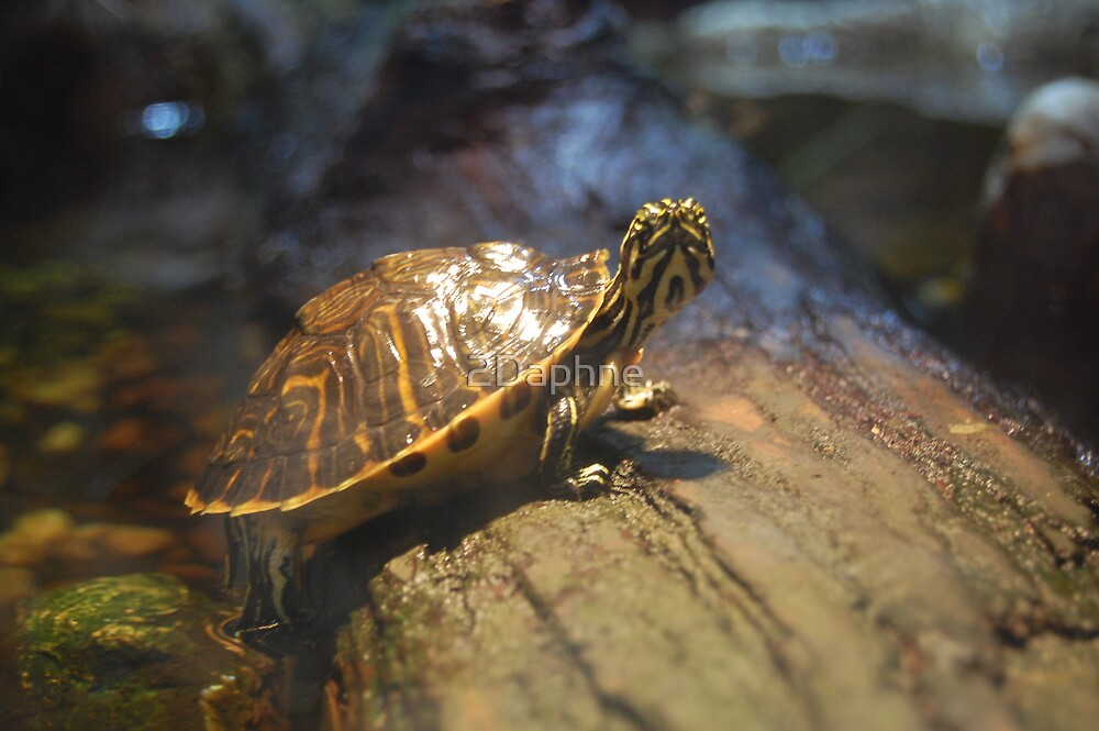 Yellow Bellie Water Turtle by 2Daphne