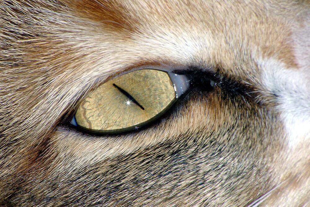 Lucky cat's eye by Emma Dixon