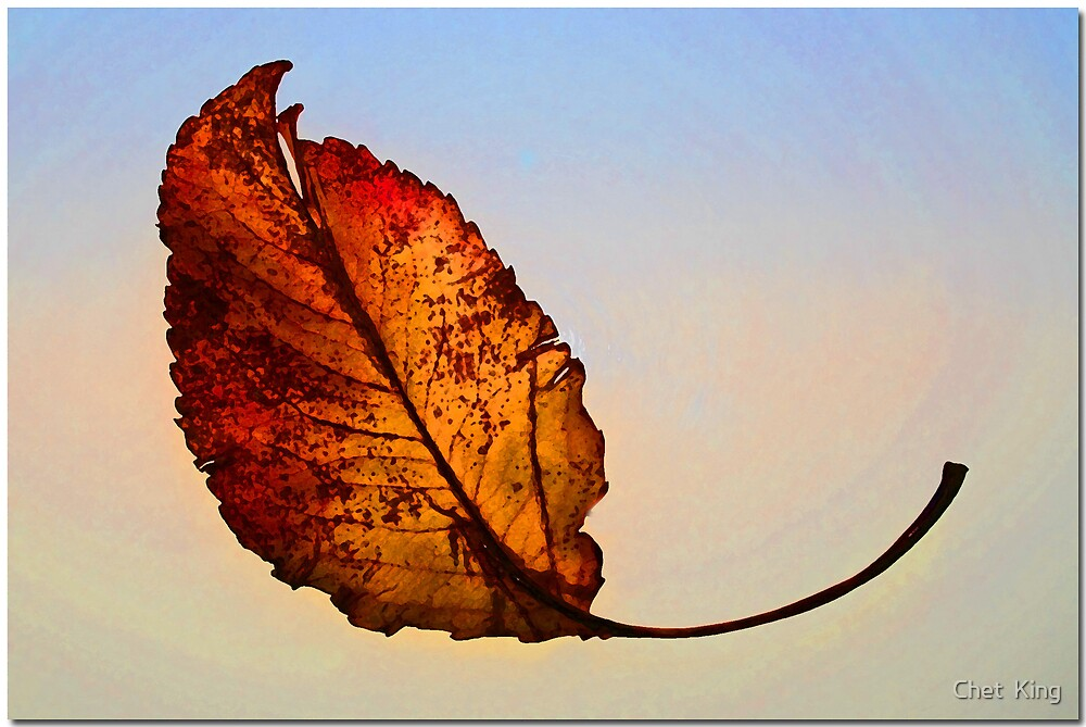 Falling Leaf by Chet  King