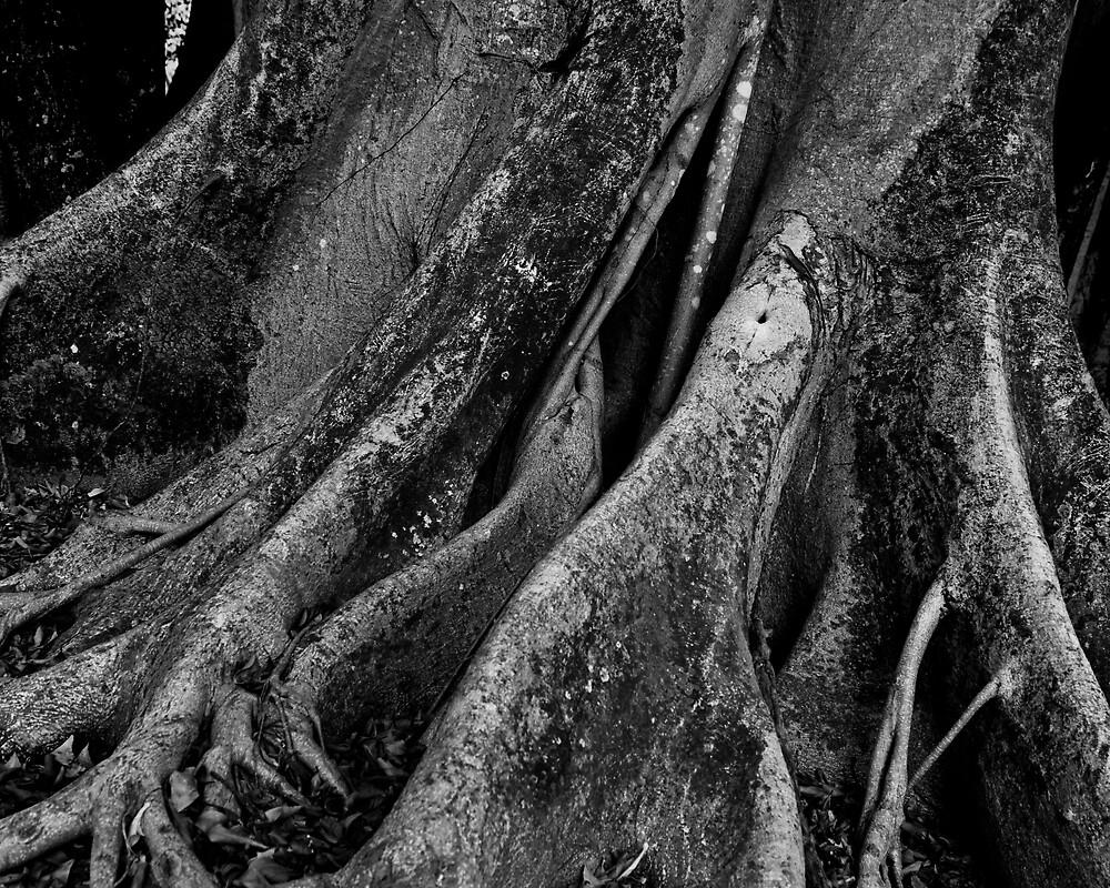 Tree by mdelva