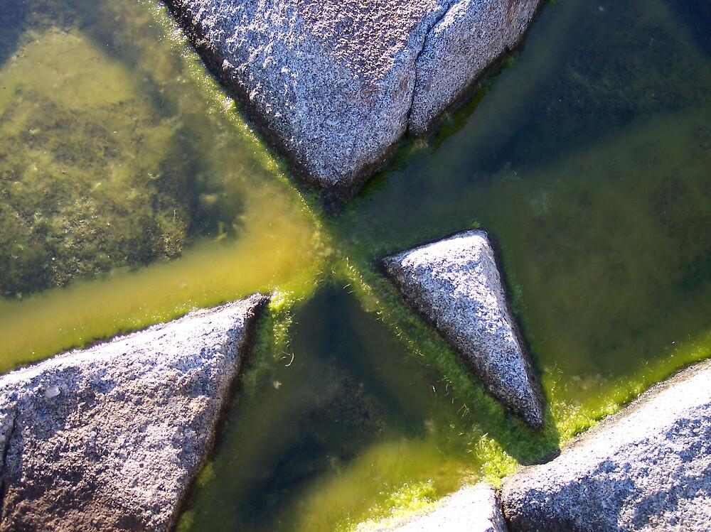 Rock and Algae by Geoffrey