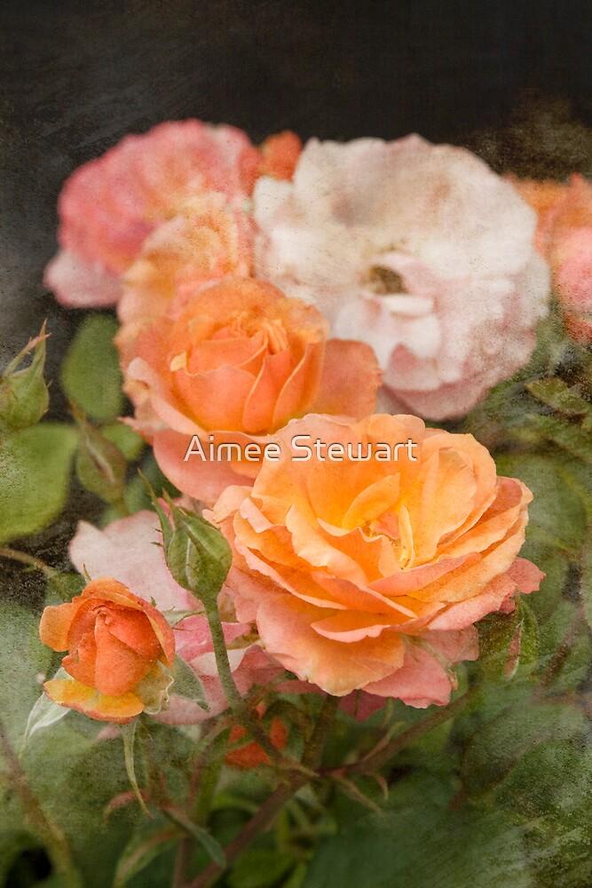 Summer Rose by Aimee Stewart