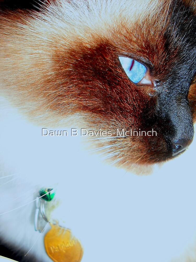 Parker 3 by Dawn B Davies-McIninch