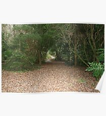 Muckross House grounds in Autumn Poster