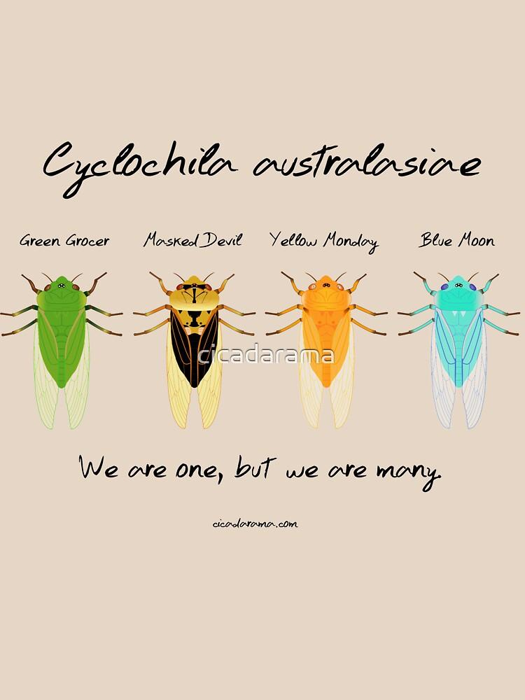 """""""We are one"""" - Cyclochila australasiae cicadas by cicadarama"""