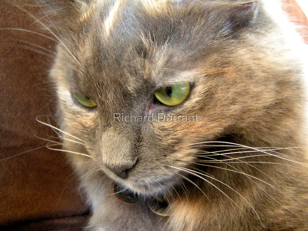 My Cat Willow by Richard Durrant