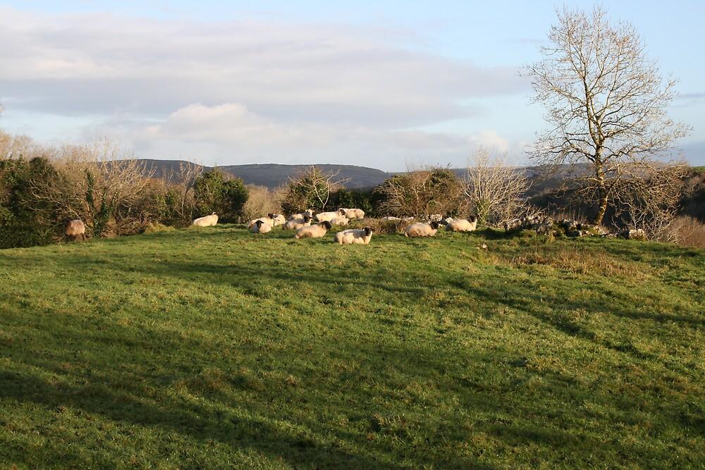 Rural scene in north Clare by John Quinn