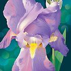 Iris de Lumière by Linda Hardt