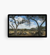Zebras and Wildebeests in the Shade Canvas Print