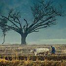 Struggle for existence. by Sagar Lahiri