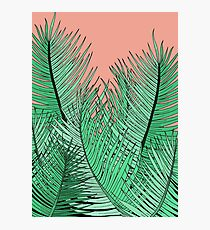 The green palm leaves Photographic Print