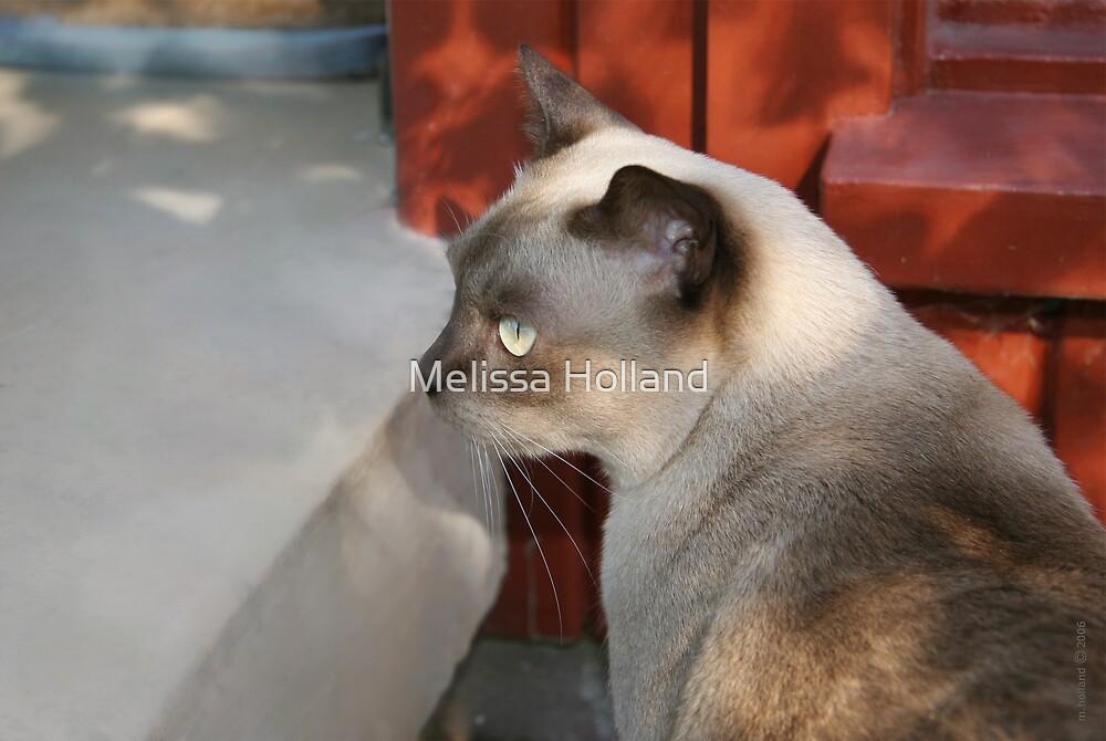 Burmese Cat on Step by Melissa Holland