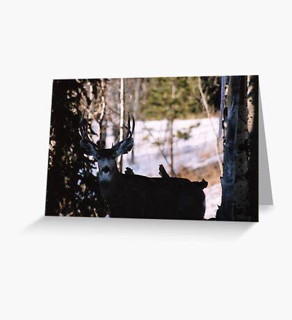 My Favorite Buck!! Greeting Card