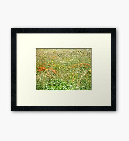 FCMA Meadow - Cape Cod - Barnstable County - Massachusetts Framed Print