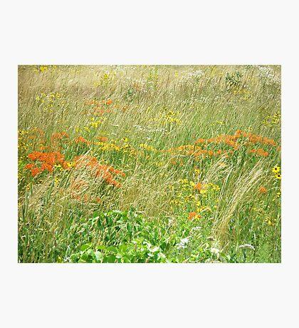 FCMA Meadow - Cape Cod - Barnstable County - Massachusetts Photographic Print