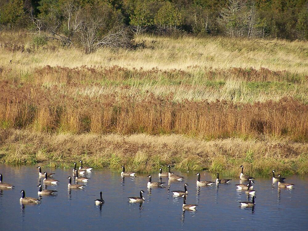 Autumn Geese by Gene Cyr