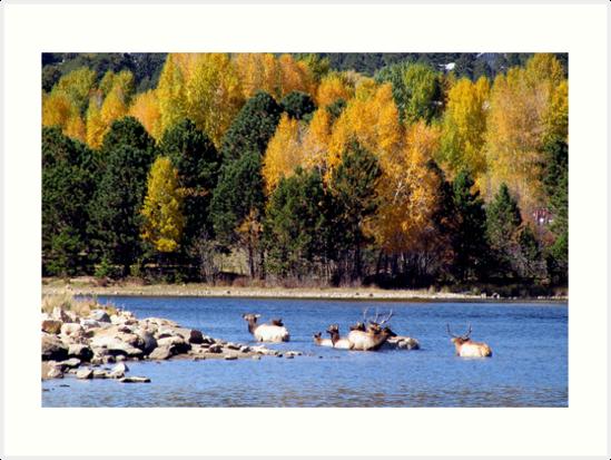 Autumn Swim by Jan Landers