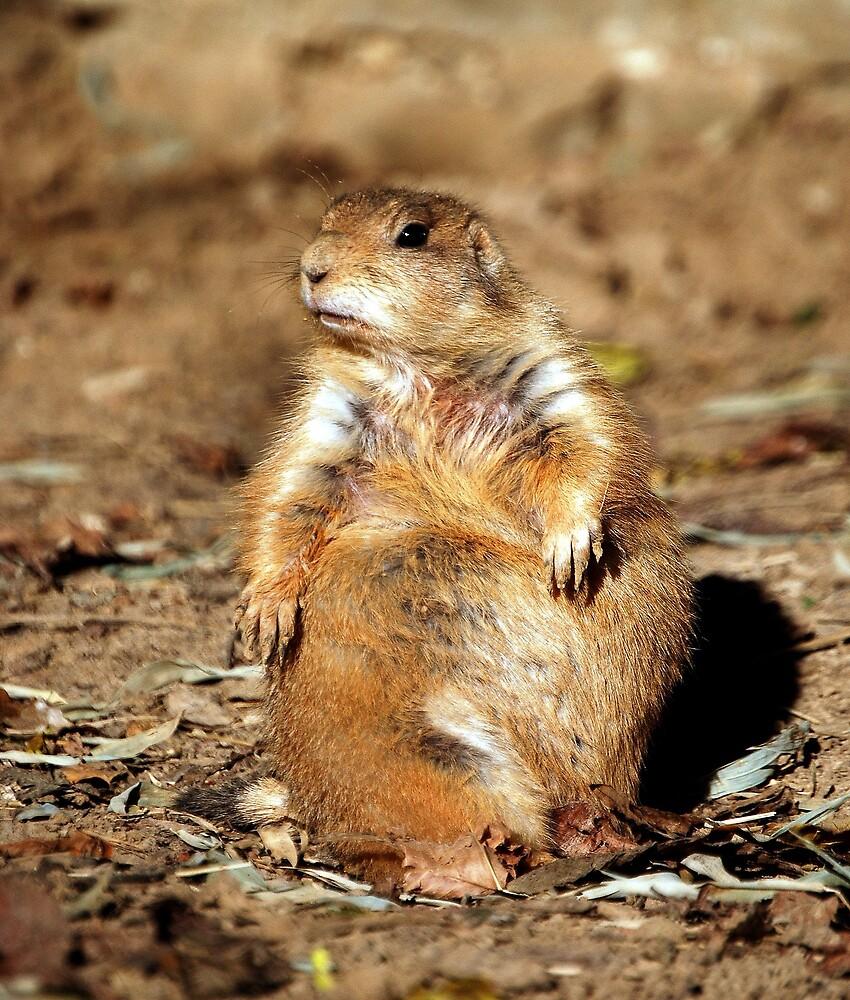 Sciuridae Rodent... by LjMaxx