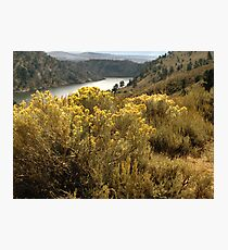 Colorful Colorado Canyon Brush Photographic Print