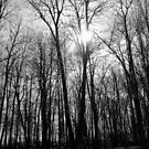 Spooktacular woods by debfaraday