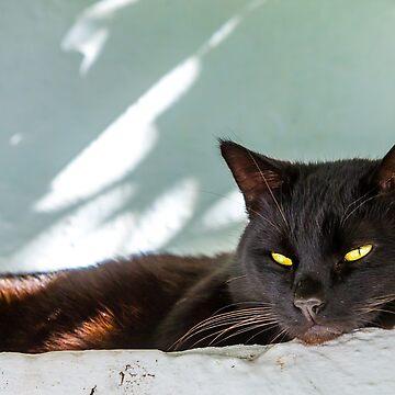 Sleepy Black Cat by Dalyn
