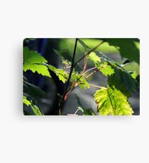 Grape Canvas Print