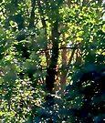 Woodland Dream by ZannaLea