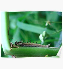 A caterpillar....... shedding Poster