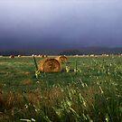 Hay Day, Country NSW by Matt  Lauder