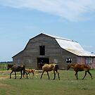 Prairie Horses, Prairie Barn by WildestArt