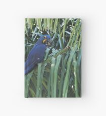 Hyacinth Macaw in the wild Hardcover Journal