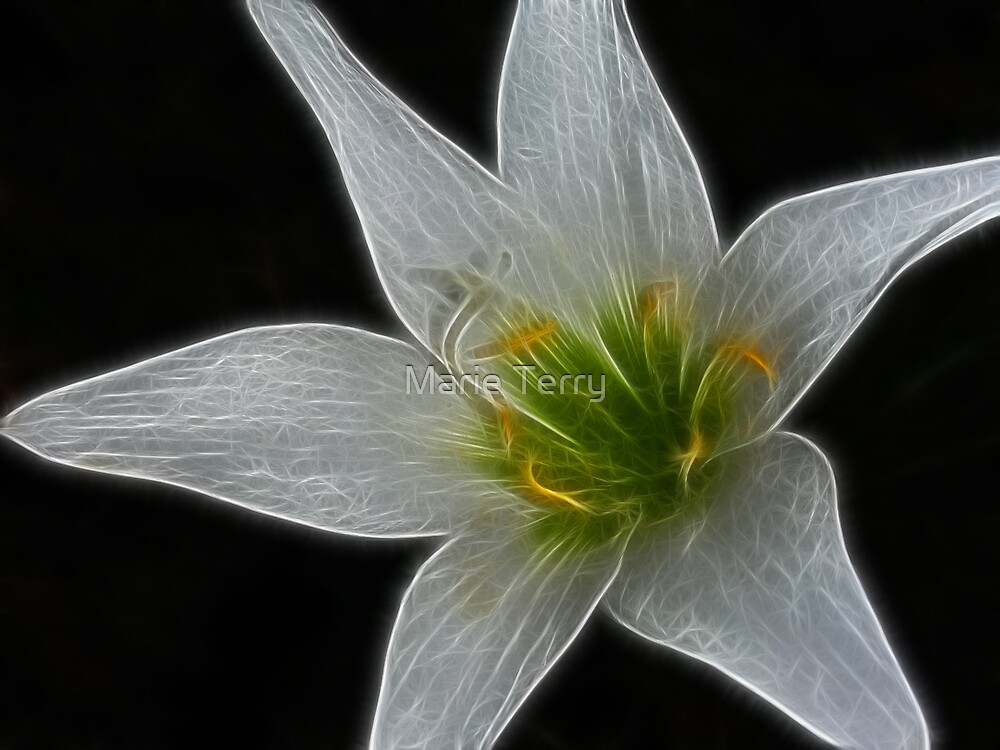 Day Lily by Marie Terry
